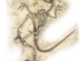 background__fossil-splayed--full.png