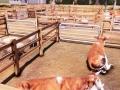 Real Farm (14)