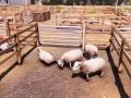 Real Farm (15)