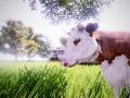 Real Farm (5)
