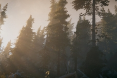 Unity 2019-06-22 , 18:01:27 Unity 2018.2.21f1 Personal (64bit) - Trailer.unity - AoF Trailer[Forest] - PC, Mac & Linux Standalone* <dx11/>